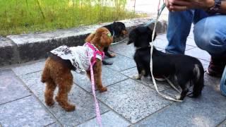 木曽三川公園に行ってきました わんこ連れの家族も多くて色々お話出来ま...