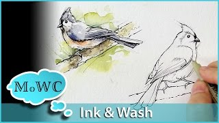 Painting Birds With Line and Wash Watercolor Technique