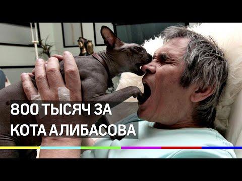 800 тысяч за кота Алибасова. Приметы беглеца