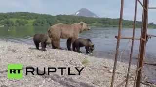 Российский фотограф сумел сделать редкие кадры бурых медведей на Камчатке