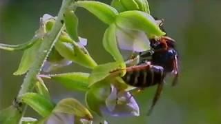 Тайна орхидей. Формы природы.