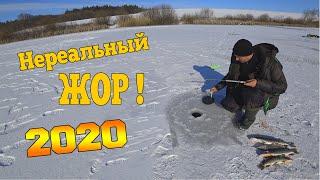 Очень много щуки в этом озере ног не чувствуешь Крутая рыбалка на жерлицы 2020