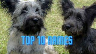 Top 10 Skye Terrier Dog Names 2021