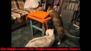 Кот Марфа и кошка Сэм. Телефон вместо котенка. Квест 1