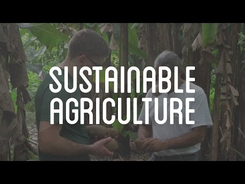 Sustainable Agriculture in Tapachula, Mexico