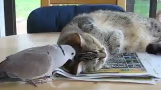 FUNNY ANIMAL VIDEOS : Cat Reaction