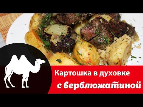 Как приготовить верблюжатину в духовке: рецепт с фото вкусной картошки с мясом, польза блюда