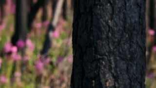 фильм Вместе сохраним леса от пожаров