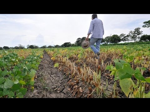 U.N. Climate Panel Issues Dire Warning of Threat to Global Food Supply, Calls For Action (2/2)