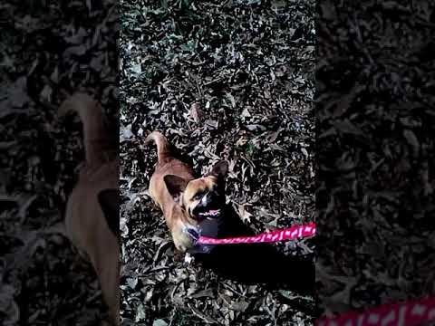 dog-tricks-baby-spins-like-a-ballerina