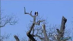 Hill Country Eagles