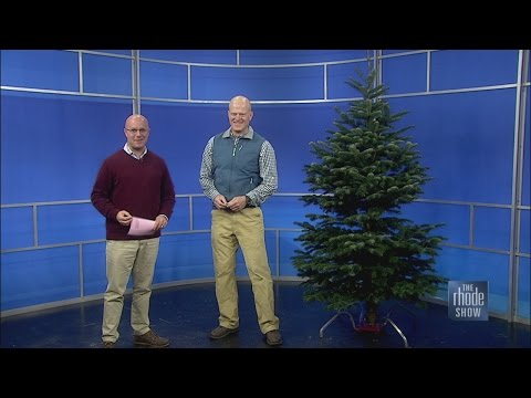 Fresh Christmas Tree Maintenance Tips