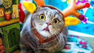 So Many Cute Kittens Videos (no 1) ❤ Funny Animals TV ❤ Funny Cats Vine Compilation December