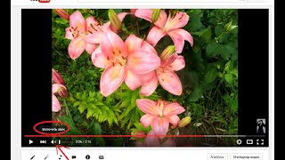 При просмотре видео картинка есть, а звука нет!(Что делать если на YouTube нет звука? При просмотре видео картинка есть, а звука нет! Я неоднократно сталкивал..., 2015-11-10T13:24:07.000Z)
