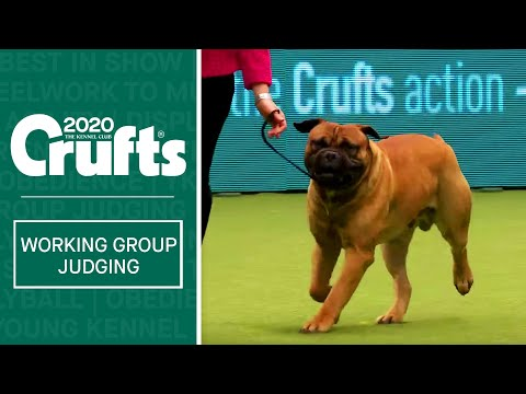 Working Group Judging Crufts 2020 Youtube