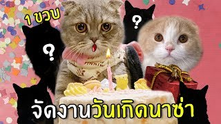 [ENG SUB] Surprise Birthday Cat 1 Year Old