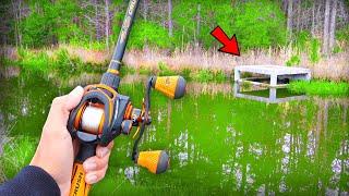 Catching GIANT Bass on BIG Topwater! (TROPHY Bass Fishing)