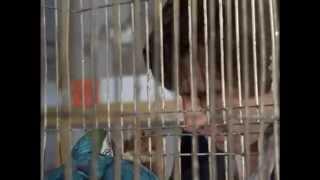 The Sweeney Season 2 Episode 9 Stay Lucky Eh