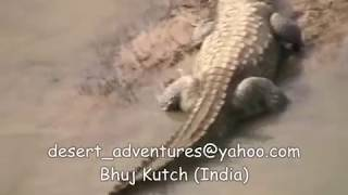 Wildlife Movie Kutch India