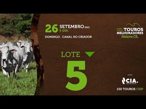 LOTE 5 - LEILÃO VIRTUAL DE TOUROS 2021 NELORE OL - CEIP