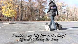 Shih-tzu Maltese Brothers Amazing Off Leash Dog Training New Jersey