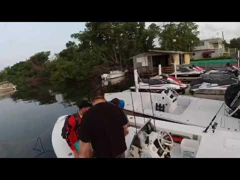 Fishing In Puerto Rico Backwater Tarpon