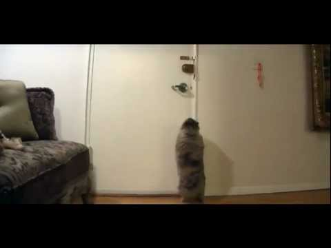 Smart Cat Opens Locked Door! (NEW)