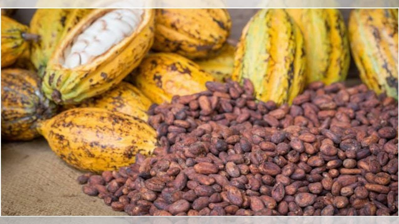 Ivory Coast Acts To Avert Defaults On Cocoa Export Contracts This Season | ESM Magazine