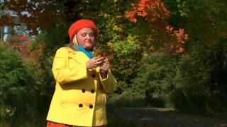 J'adore l'automne : Comparaison des couleurs thumbnail