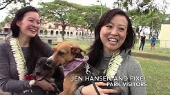 Off-leash dog park opens in Aala Park on Oahu