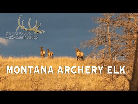 Montana Archery Elk With Randy Newberg (OYOA S3 E6)
