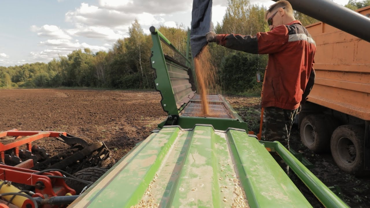 Сею озимую пшеницу.