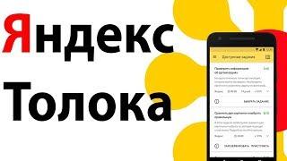Приложение для заработка Яндекс Толока