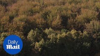 Micheldever Woods in Hampshire burst into Autumn colours