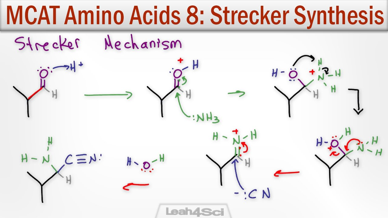 adults synthesise amino acids Adults synthesise amino acids protein and amino acids - recommended dietary allowances creatine - wikipedia these concepts are important in the livestock industry.