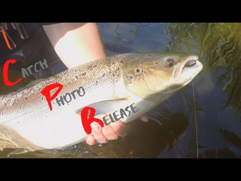 Salmon Fishing Ireland - Catch Photo Release