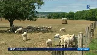 Portrait d'une éleveuse d'ovins