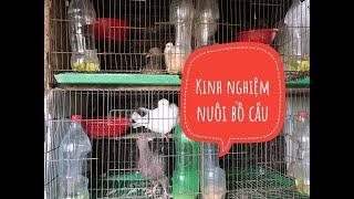 Tự chế hũ đựng thức ăn cho chim bồ câu | Kinh nghiệm nuôi bồ câu
