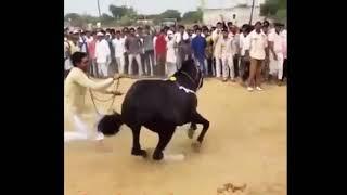 Sapna chaudhary   Mein teri Nachai Nachu Su  Raj Mawar  Haryanvi Stage Dance video   WiKi SiD 
