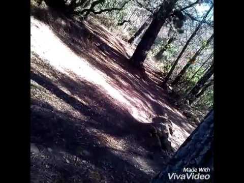 Downhill angol nelson diaz