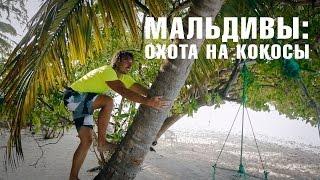 ОТДЫХ НА МАЛЬДИВАХ | кокосовая ферма - как выбрать и открыть кокос(ОТДЫХ НА МАЛЬДИВАХ | кокосовая ферма - как выбрать и открыть кокос. На Мальдивских островах можно провести..., 2015-06-01T20:30:02.000Z)