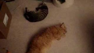 Rocky and Binoo - Sleep filled days, Catnip Nights