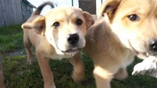 子犬による牡蠣殻争奪戦 thumbnail