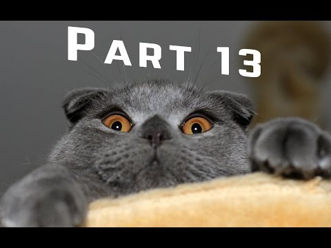 Adorable Cats Compilation – Best Funny Cat Videos Ever Part 13