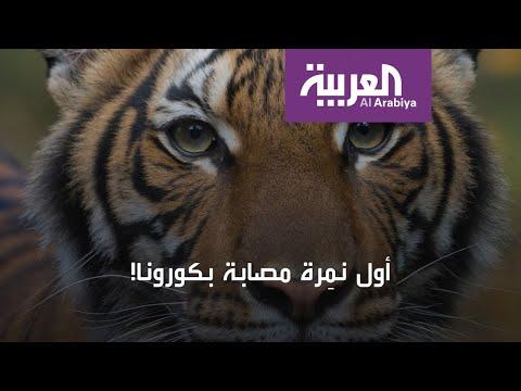بعد إصابة -نادية-.. تطور خطير ومفاجئ حول انتقال عدوى كورونا  - نشر قبل 25 دقيقة