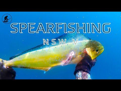 Spearfishing NSW 5 2019