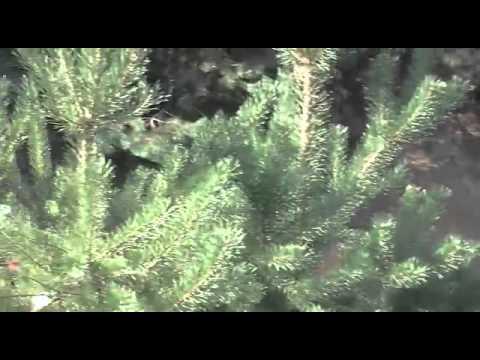 Sidecarcross jänschwalde