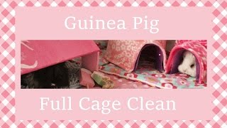 Guinea Pig Full Cage Clean Routine