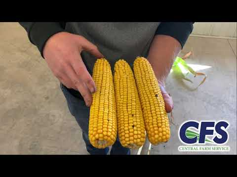 Brevant B00K94AMXT Hybrid Seed Highlights with Dylan Barth, CFS Agronomist