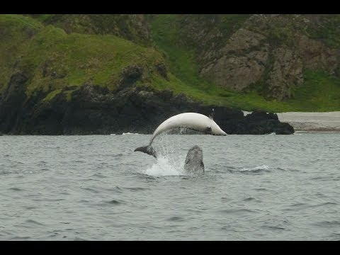 Dolphins Malin Head 13th June 2014